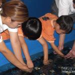 回胴遊商九州・沖縄支部、宜野湾マリン支援センターでサンゴの保全活動を実施