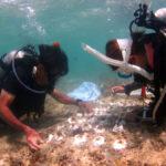 回胴遊商九州・沖縄支部、ブセナ海中公園でサンゴの保全活動を実施